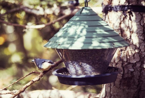 bird-2858587_1280