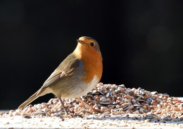 bird-3955820_1280