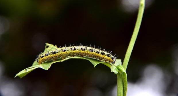 caterpillar-3803243_1280