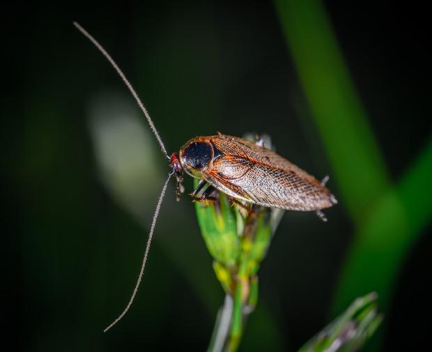 cockroach-3695421_1280