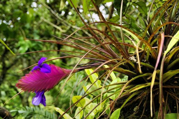 exotic-flower-917025_1280