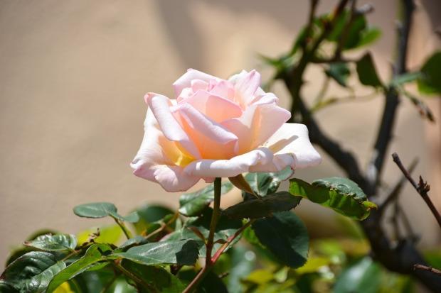 flower-2000159_1280