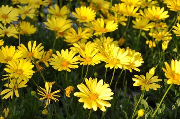flowers-3988847_1280