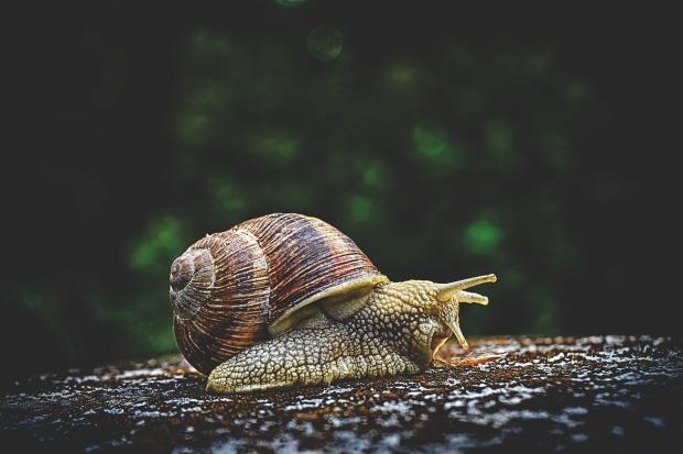 snail-3705324_1280