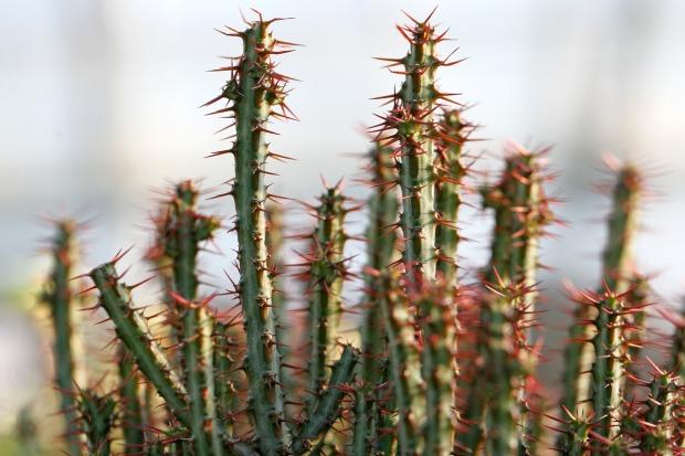 a-fleshy-plant-1464420_1280