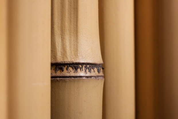 bamboo-1383886_1280