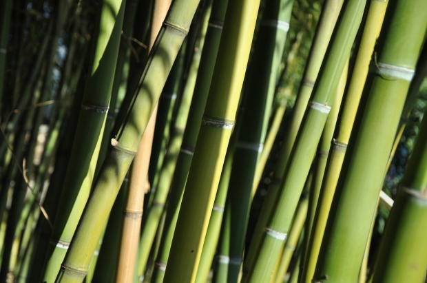 bamboo-49546_1280