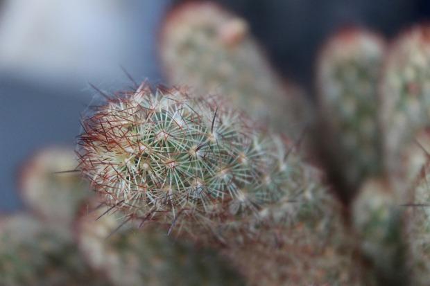 succulent-plant-3405218_1280