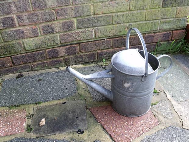 watering-163923_1280