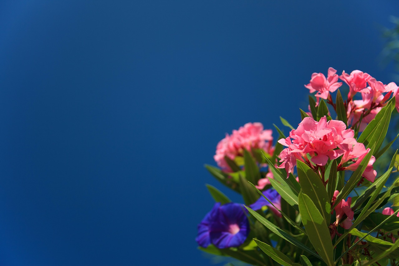 bloom-21865_1280