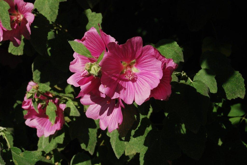 Cette image a un attribut alt vide; le nom du fichier est flower-2934977_1280.jpg